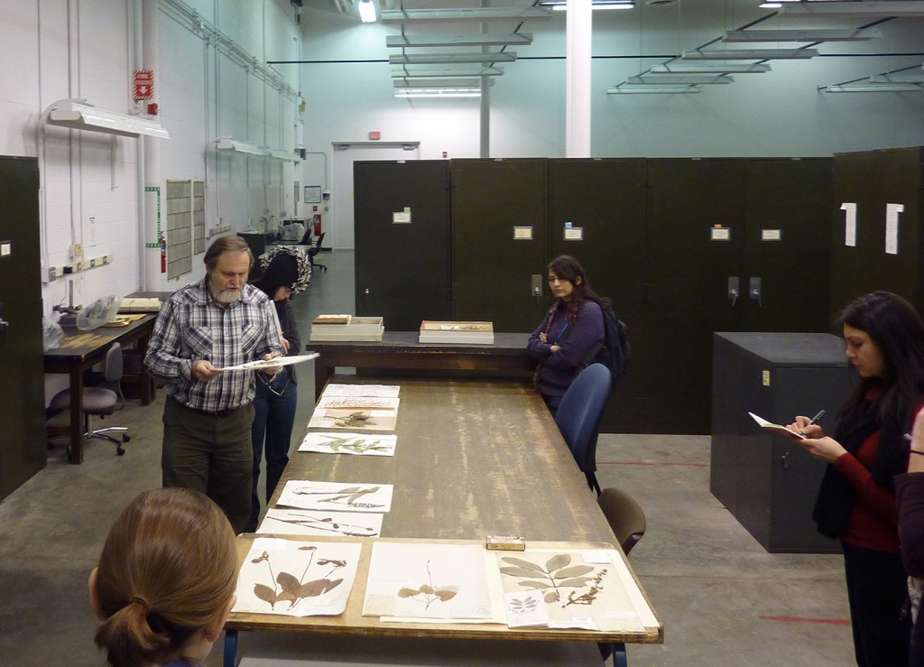 MSP10 with curator Tony Rezniek at the UM Herbarium