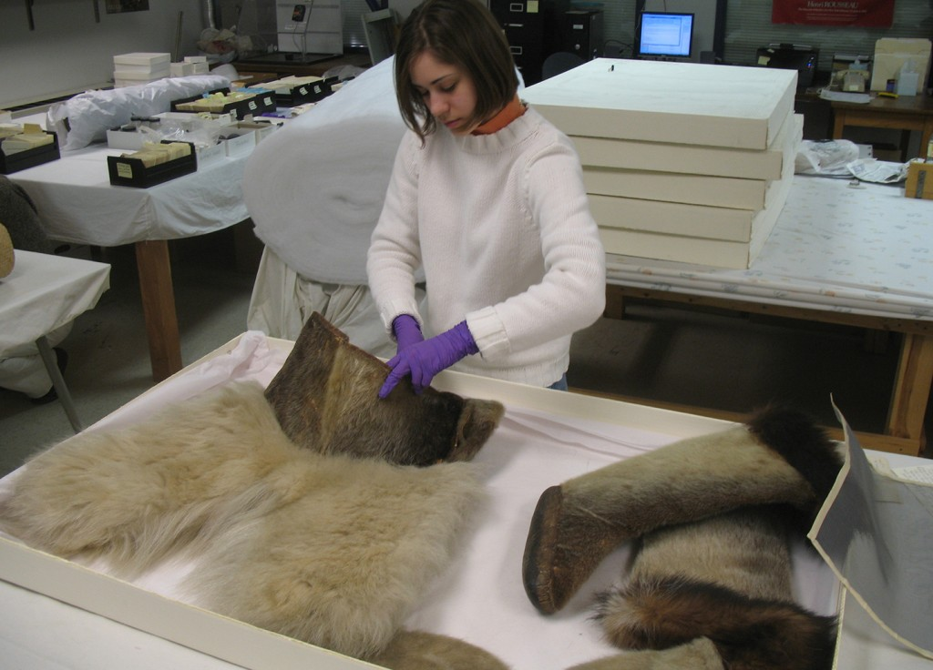 Museum Studies Undergrad (and MSP12) Marisa Spytzman with Museum of Anthro polar bear fur pants
